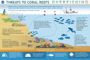 coral reef and overfishing infographic