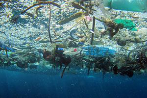 underwater photo looking up through marine debris floating on the surface