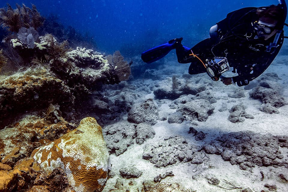 Scientists document stony coral tissue loss disease as it infects nearly two dozen stony coral species on the Florida Reef Tract.