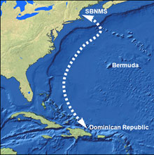 NOAA Helps Form Benevolent Bermuda Triangle to Protect Humpback