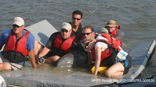 A dolphin being escorted by volunteers on a raft