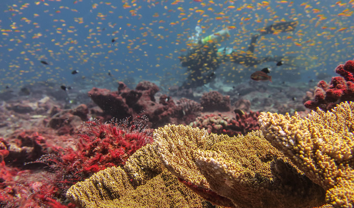 Coral reef colonies near Jarvis Island; Image credit:Tate Wester