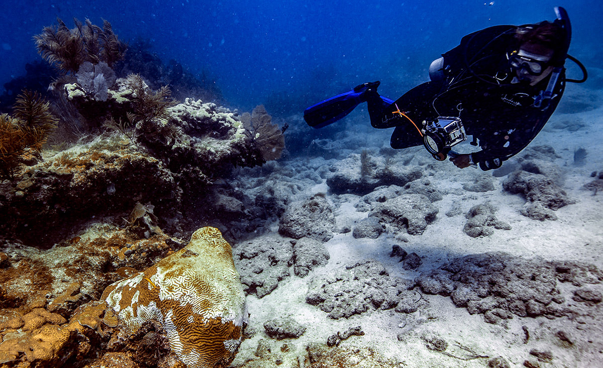 coral disease seen under the water by a science diver