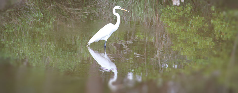 an egret in a tidal pool