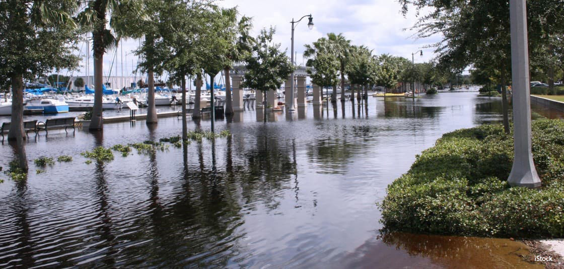 Next to a harbor in Florida, a sidewalk and the surrounding landscape is flooded due to sea level rise.