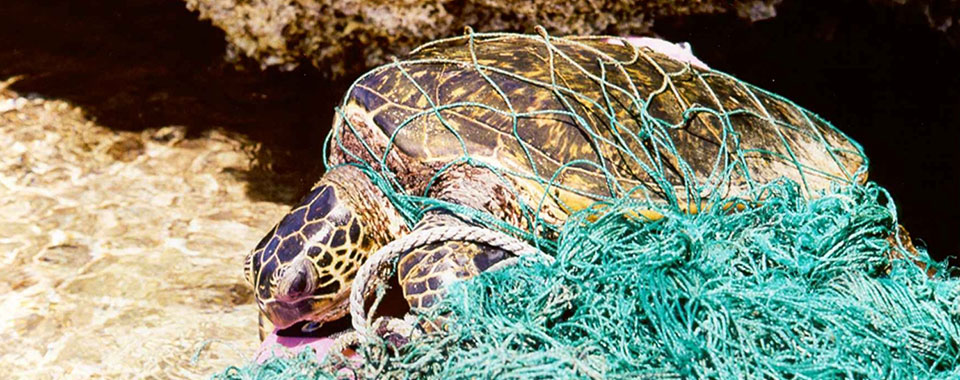 Ten Things You Should Know About Marine Debris