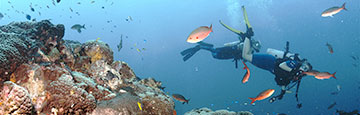 Scuba divers explore the Flower Garden Banks National Marine Sanctuary