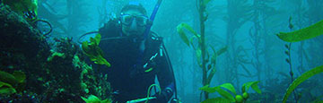Diver in Channel Islands kelp forest