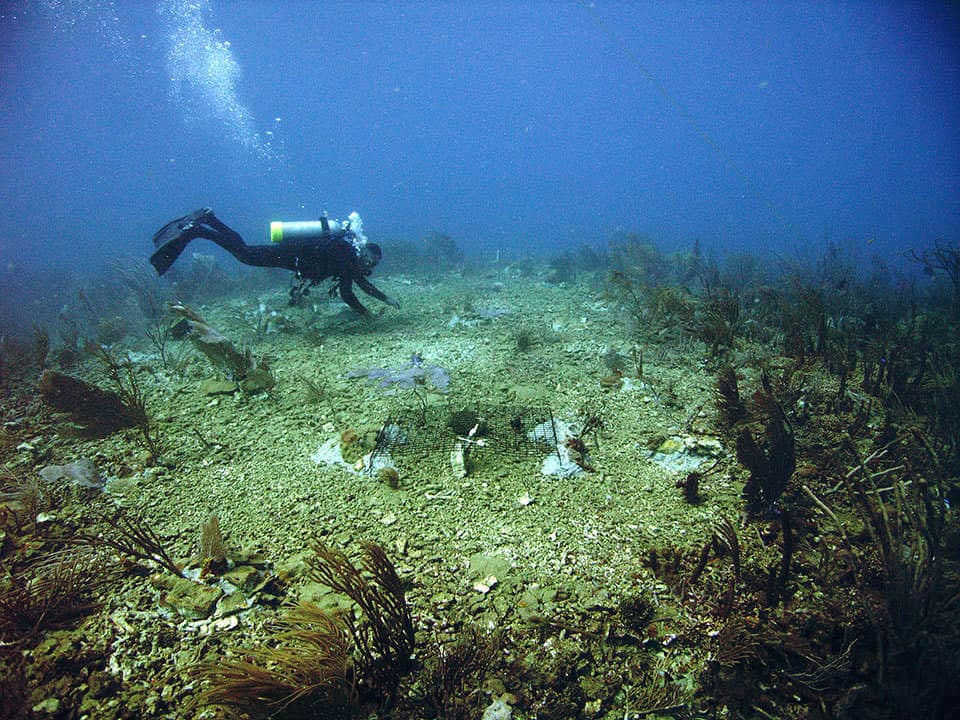 In 2006, an oil tanker grounding damaged a coral reef in Tallaboa, Puerto Rico.