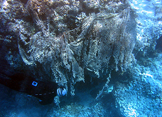 reef covered by fishing net