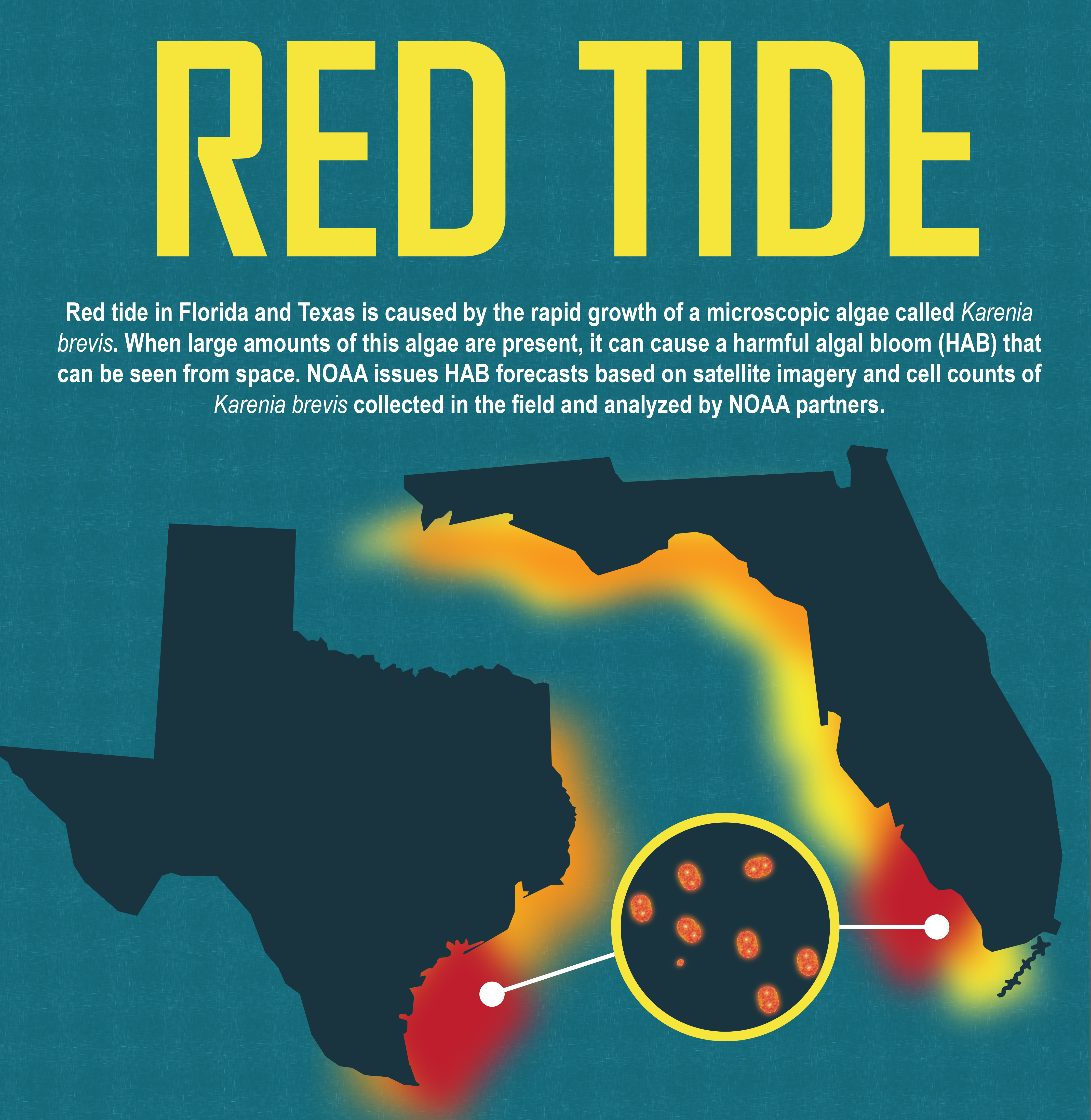 illustration of redtide