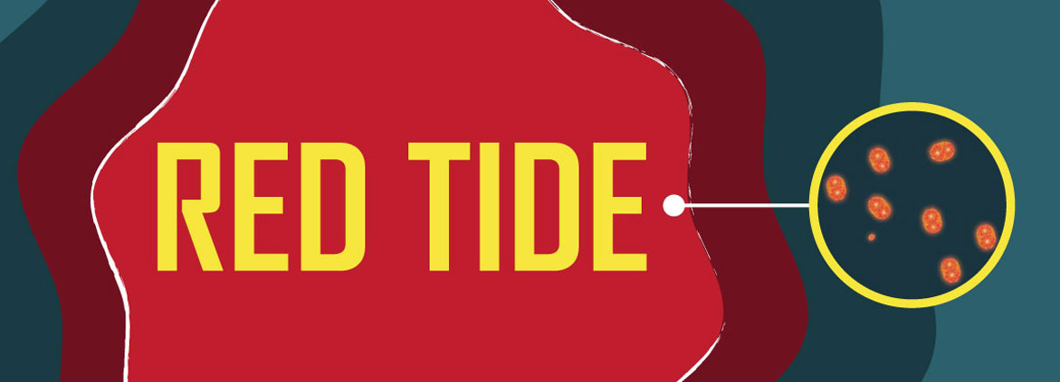 NOAA Forecast for Red Tide in Florida