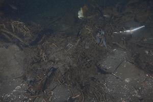 underwater image of the U.S. Coast Survey Steamer Robert J. Walker