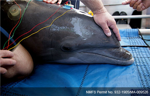 science news researchers analyze mechanics dolphin