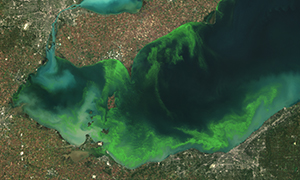 Significant Harmful Algal Bloom Predicted in Western Lake Erie for Summer 2013 What s New