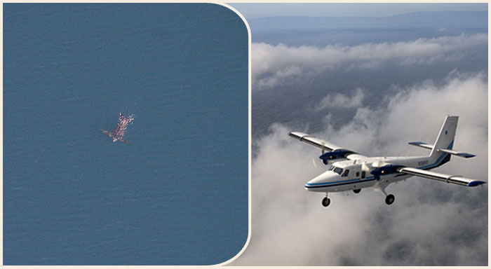 combined image of a NOAA Twin Otter Aircraft and a leatherback turtle swimming in ocean