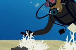 graphic of scuba diver and bleached reef