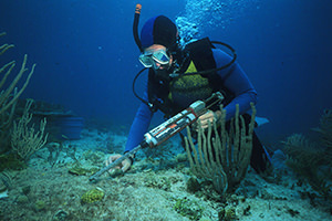 A biologist uses a glue gun to reattach a piece of living coral broken loose when a boat went aground on the shallow coral reef