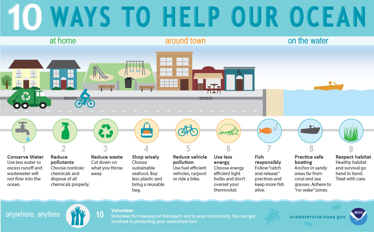 infographic showing how you can help our ocean