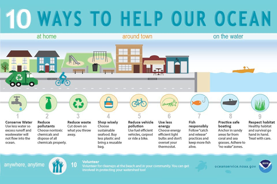 an infographic on ways to help our ocean