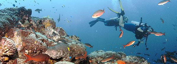 divers explore a coral reef in a national marine sanctuary