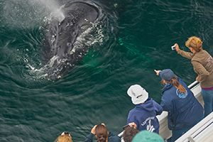 Channel Islands National Marine Sanctuary Naturalist Corps volunteers support a whale watching expedition