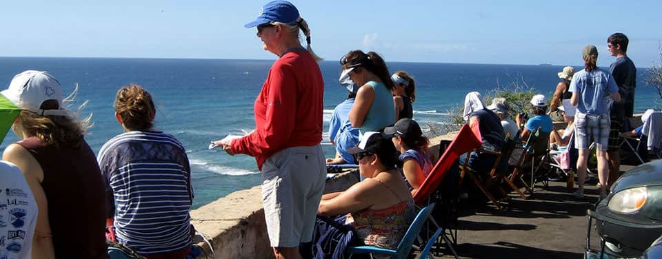 volunteers counting whales in Hawaii