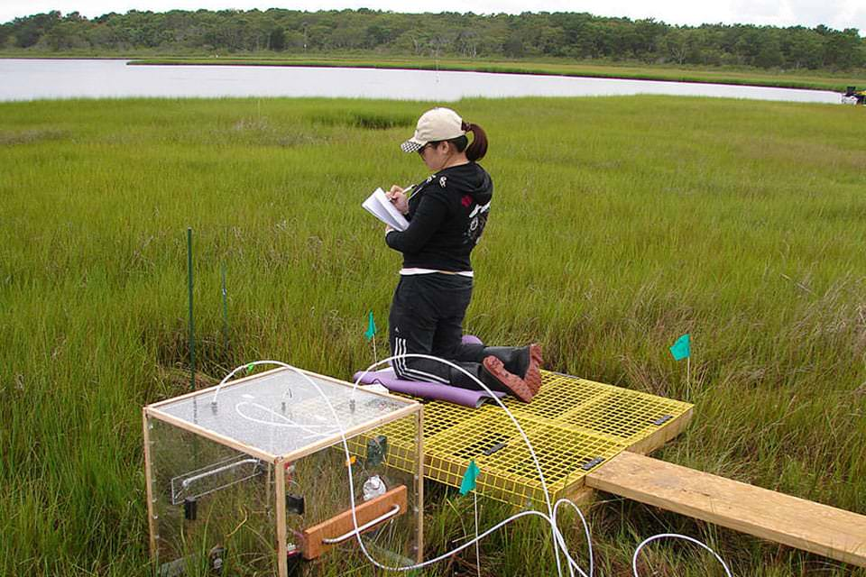 A graduate student at the Waquoit Bay National Estuarine Research Reserve documents information gathered from a chamber set up to measure carbon dioxide and methane exchange within the marsh.