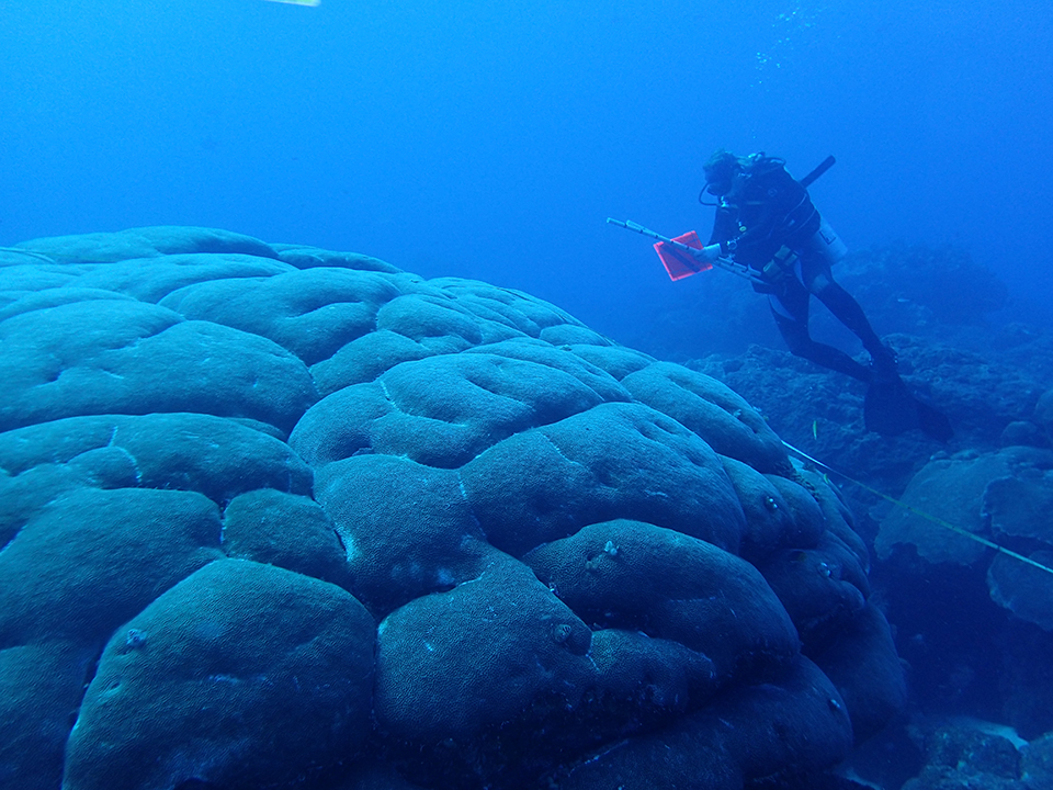 A diver amongst corals