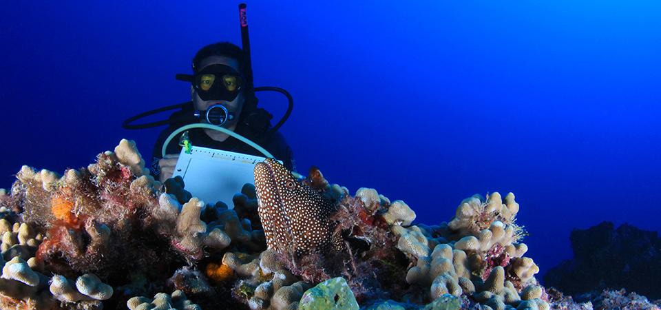 diving deeper exploring hawaii s coral reefs