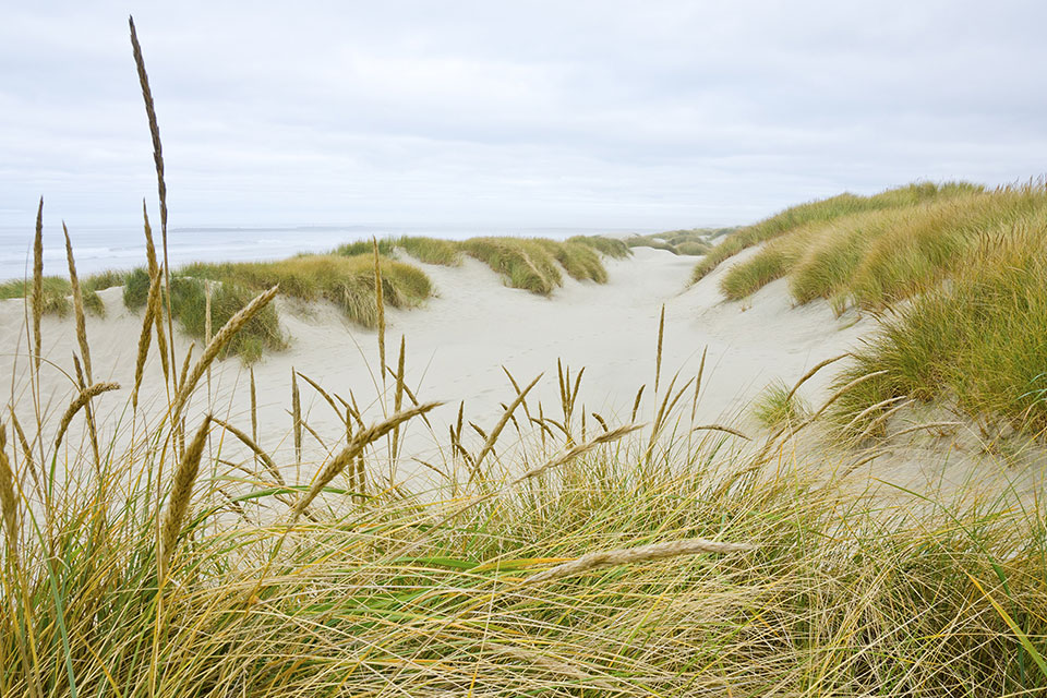 a beach with dunes and grasses