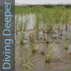 Diving Deeper: Natural Resource Restoration