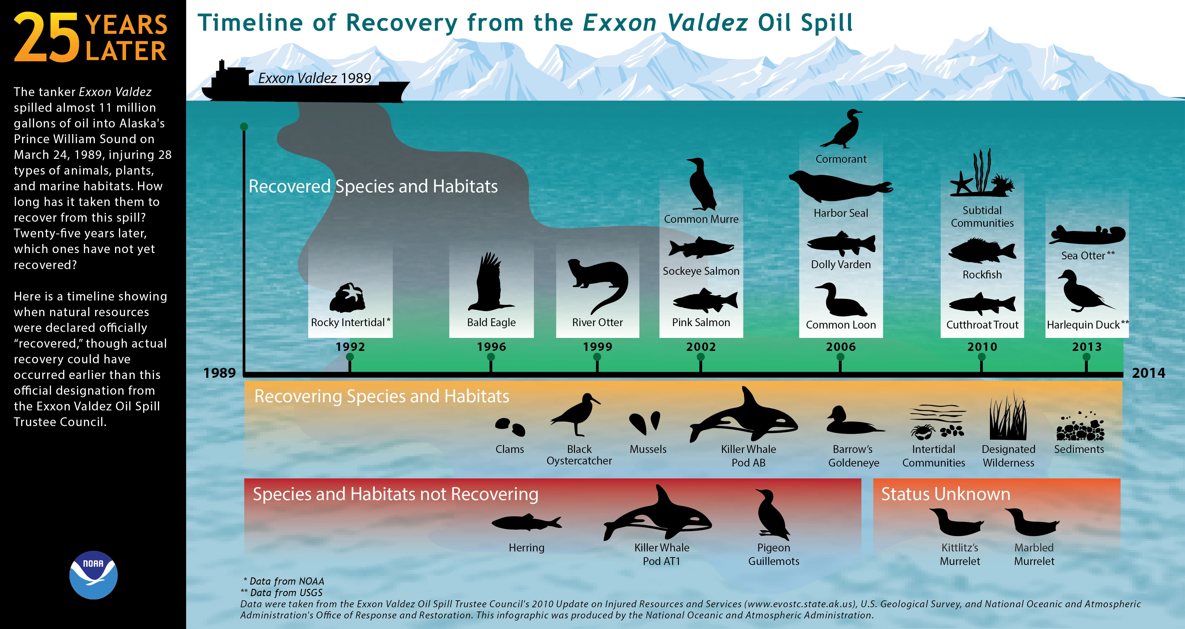 Oil-covered birds after the Exxon Valdez Oil Spill