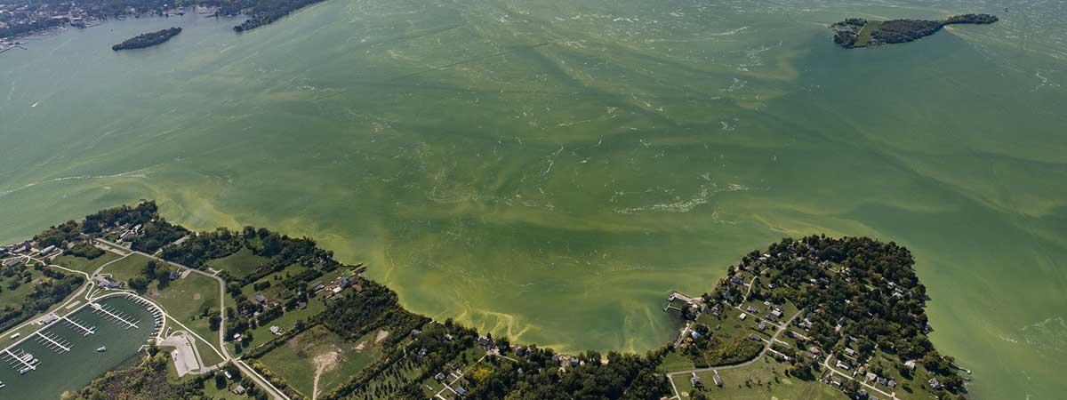 a green harmful algal bloom on Lake Erie in 2017