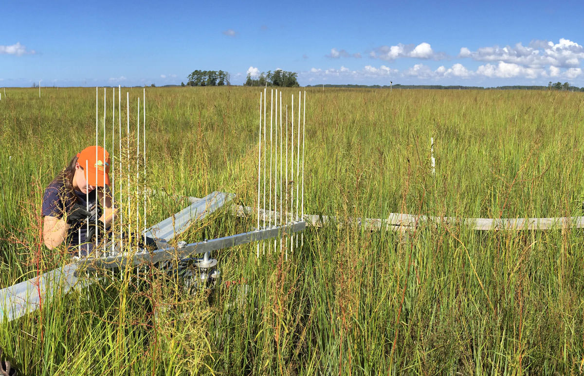 Scientists take surface elevation table measurements on Deal Island, Maryland.