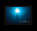 Free diving at Papahānaumokuākea Marine National Monument.